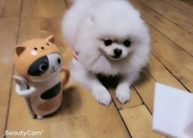 寻狗启示,拜托好心人帮串串回家(已回家),它是一只非常可爱的宠物狗狗,希望它早日回家,不要变成流浪狗。