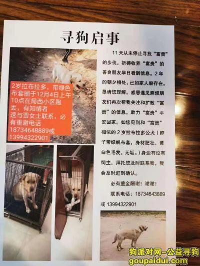 大同寻狗网,特别希望你能早点回家,它是一只非常可爱的宠物狗狗,希望它早日回家,不要变成流浪狗。