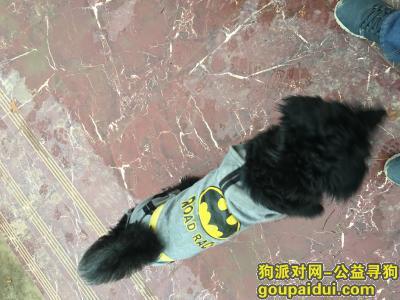 ,黑色蝙蝠侠宠物狗一条,它是一只非常可爱的宠物狗狗,希望它早日回家,不要变成流浪狗。