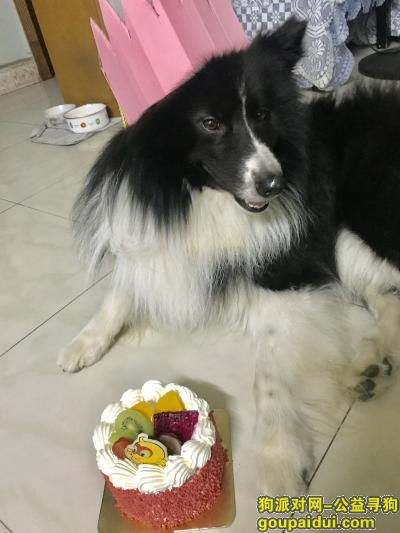 常德找狗,津市澧县寻狗,找到必有重谢,它是一只非常可爱的宠物狗狗,希望它早日回家,不要变成流浪狗。