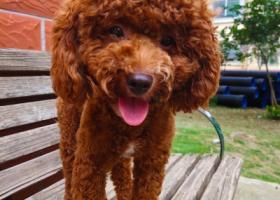 寻狗启示,好心人帮忙转发好人一生平安,它是一只非常可爱的宠物狗狗,希望它早日回家,不要变成流浪狗。