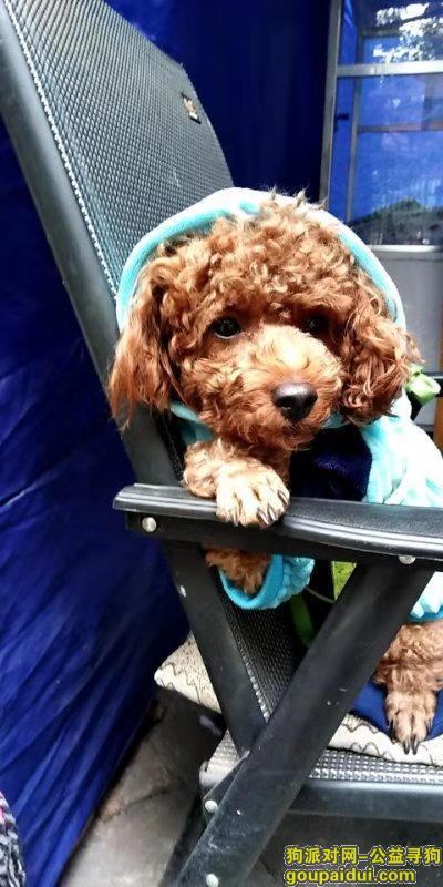 绵阳找狗,绵阳顺河街附近走丢的,它是一只非常可爱的宠物狗狗,希望它早日回家,不要变成流浪狗。