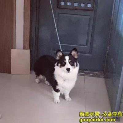 焦作找狗,寻狗启示,重谢,求扩展!,它是一只非常可爱的宠物狗狗,希望它早日回家,不要变成流浪狗。