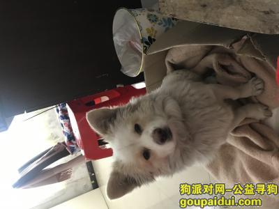 ,寻狗!1月10号走丢!狗叫小白!小型犬!,它是一只非常可爱的宠物狗狗,希望它早日回家,不要变成流浪狗。