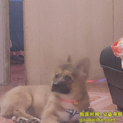 桂林找狗,求求各位好心人帮帮忙,它是一只非常可爱的宠物狗狗,希望它早日回家,不要变成流浪狗。