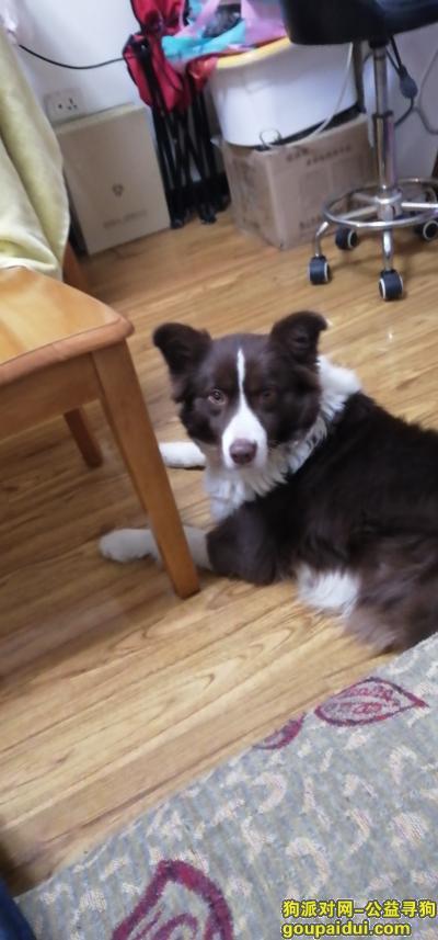 ,捡到狗狗,请失主联系本人,它是一只非常可爱的宠物狗狗,希望它早日回家,不要变成流浪狗。