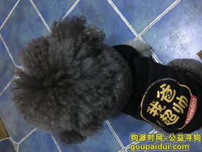 眉山寻狗启示,寻找自己养的狗狗回家,希望大家帮忙,很着急,在等它回家,它是一只非常可爱的宠物狗狗,希望它早日回家,不要变成流浪狗。