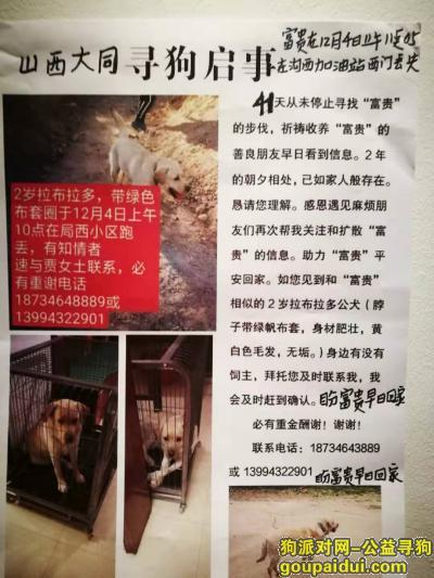 大同寻狗启示,求助好心人谢谢大家了,它是一只非常可爱的宠物狗狗,希望它早日回家,不要变成流浪狗。