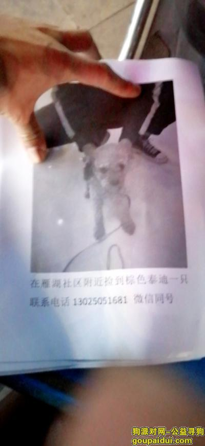 温州寻狗启示,温州汤家桥雁湖社区附近捡到的棕色泰迪一只,它是一只非常可爱的宠物狗狗,希望它早日回家,不要变成流浪狗。