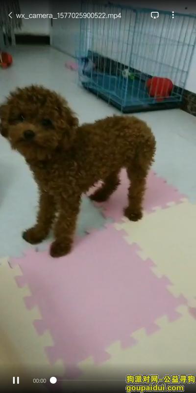 益阳找狗,爱狗走丢,如果找回必有重谢,它是一只非常可爱的宠物狗狗,希望它早日回家,不要变成流浪狗。