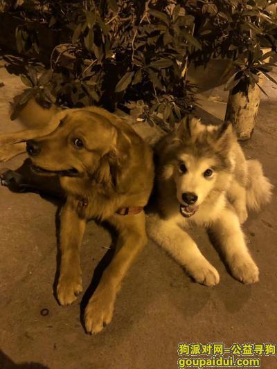 佛山寻狗网,两个宝贝儿你们快回来,它是一只非常可爱的宠物狗狗,希望它早日回家,不要变成流浪狗。