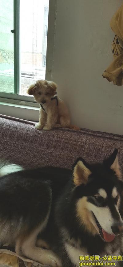 绵阳寻狗网,串串小家伙走失,请问有没有看到的。非常希望能找到,它是一只非常可爱的宠物狗狗,希望它早日回家,不要变成流浪狗。