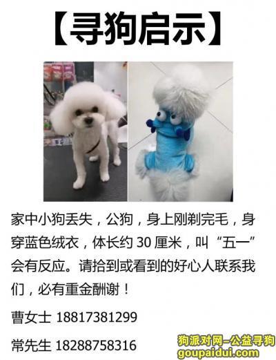 寻狗启示,上海徐汇区南宜花苑重金寻找白色泰迪,它是一只非常可爱的宠物狗狗,希望它早日回家,不要变成流浪狗。