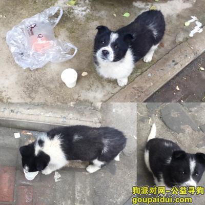 运城找狗,捡到一只黑白相间的狗狗 谁丢失了或者想领养请联系我,它是一只非常可爱的宠物狗狗,希望它早日回家,不要变成流浪狗。