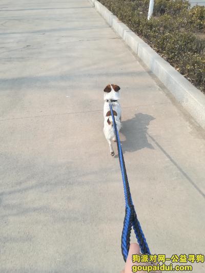 泰安丢狗,寻狗启事 狗狗失踪好几天了,它是一只非常可爱的宠物狗狗,希望它早日回家,不要变成流浪狗。