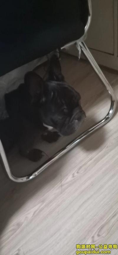本溪寻狗网,我的狗丢了斗牛黑色比较瘦,它是一只非常可爱的宠物狗狗,希望它早日回家,不要变成流浪狗。
