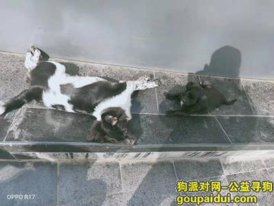 ,东莞万江丢了一大一小两只狗狗,求好心人发现了联系我!,它是一只非常可爱的宠物狗狗,希望它早日回家,不要变成流浪狗。