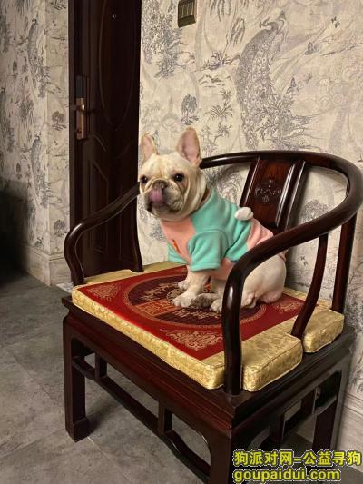 随州找狗,急!急!急!寻狗启示 请帮忙转发,它是一只非常可爱的宠物狗狗,希望它早日回家,不要变成流浪狗。