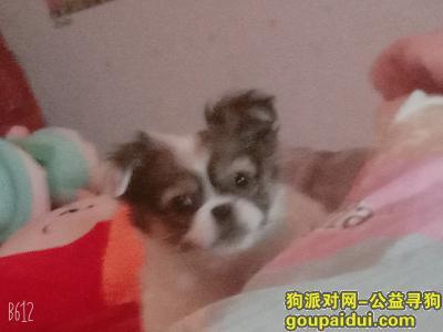 寻狗启示,找狗狗,名叫旺财,谢谢,它是一只非常可爱的宠物狗狗,希望它早日回家,不要变成流浪狗。