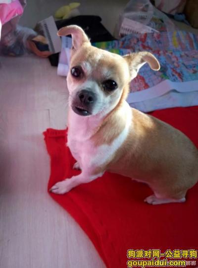 寻狗启示,送我宝贝回家过年愿酬谢5000元,它是一只非常可爱的宠物狗狗,希望它早日回家,不要变成流浪狗。