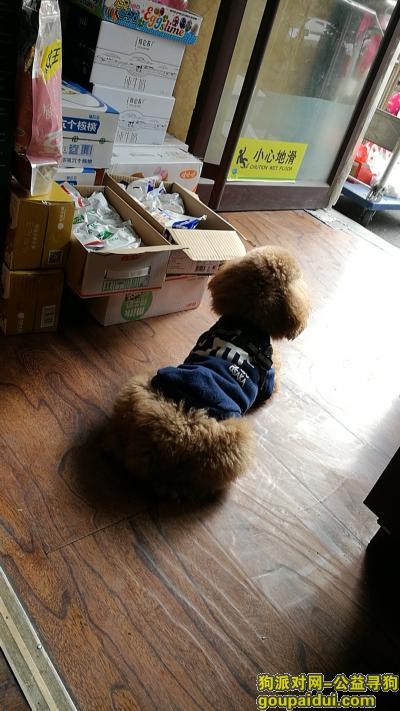 ,五岁的狗狗 丢时穿图片上的衣服 重谢,它是一只非常可爱的宠物狗狗,希望它早日回家,不要变成流浪狗。