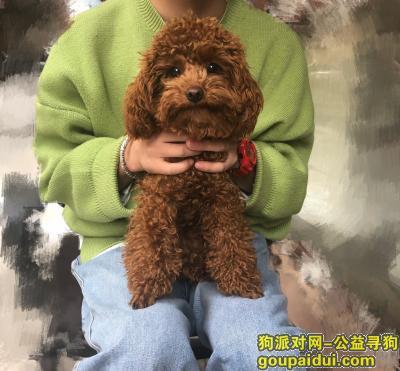 驻马店寻狗,寻狗启示2020年1月21日下午13点左右丢失,它是一只非常可爱的宠物狗狗,希望它早日回家,不要变成流浪狗。