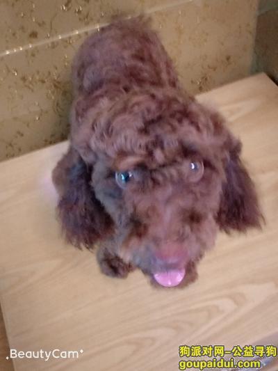 新余寻狗启示,帮忙找一下狗狗,如帮忙找到,必有重谢,它是一只非常可爱的宠物狗狗,希望它早日回家,不要变成流浪狗。