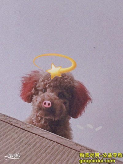 宿州寻狗网,我的泰迪丢两天了,如果有人看到,请及时和我联系,谢谢!!手机号:13470837330,它是一只非常可爱的宠物狗狗,希望它早日回家,不要变成流浪狗。