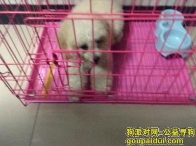 温州寻狗网,寻狗,狗狗已经走丢一年多了,它是一只非常可爱的宠物狗狗,希望它早日回家,不要变成流浪狗。