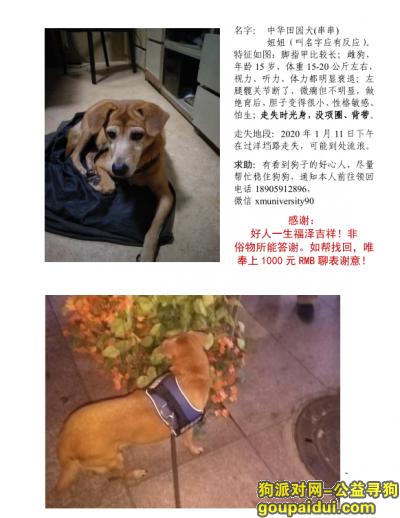 福州丢狗,寻找不懂回家的15岁狗子,它是一只非常可爱的宠物狗狗,希望它早日回家,不要变成流浪狗。
