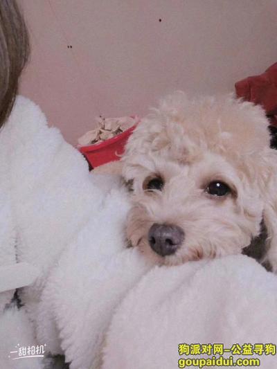 ,寻狗启示,有狗牌在脖子叫二蛋,它是一只非常可爱的宠物狗狗,希望它早日回家,不要变成流浪狗。