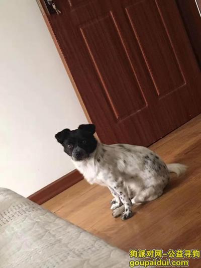 南平寻狗,寻狗狗,母,武夷花园走失,它是一只非常可爱的宠物狗狗,希望它早日回家,不要变成流浪狗。