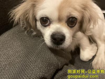 ,寻找爱犬,杰西,妈妈好想你,它是一只非常可爱的宠物狗狗,希望它早日回家,不要变成流浪狗。
