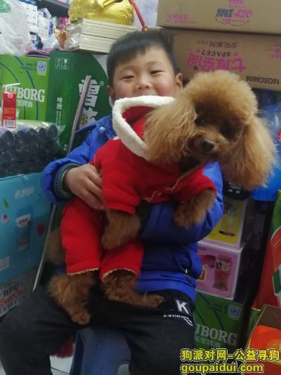 常州寻狗,找泰迪狗13921043339,15189779862,它是一只非常可爱的宠物狗狗,希望它早日回家,不要变成流浪狗。