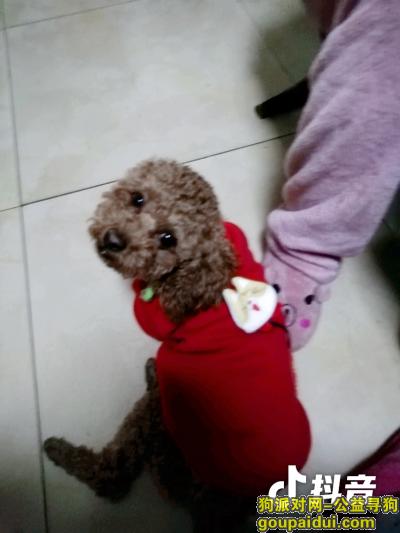 寻狗启示,找狗,一岁半的公泰迪,它是一只非常可爱的宠物狗狗,希望它早日回家,不要变成流浪狗。