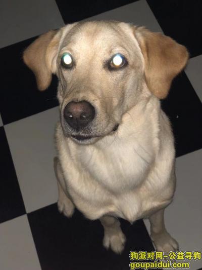 寻狗启示,名字叫好运 好心人帮它回家,它是一只非常可爱的宠物狗狗,希望它早日回家,不要变成流浪狗。