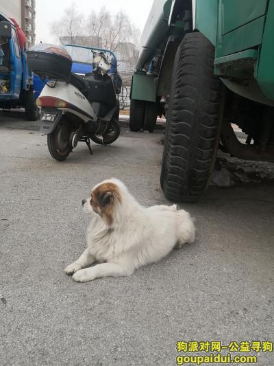 沈阳寻狗主人,东北大学院内捡到一只小笨狗,它是一只非常可爱的宠物狗狗,希望它早日回家,不要变成流浪狗。