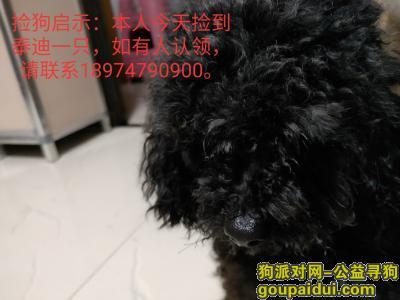 ,捡到黑色可爱泰迪狗一只,它是一只非常可爱的宠物狗狗,希望它早日回家,不要变成流浪狗。