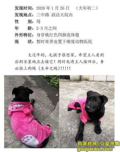 柳州找狗主人,2020年初二捡到黑色狗狗,它是一只非常可爱的宠物狗狗,希望它早日回家,不要变成流浪狗。