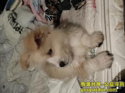 ,余杭区,西溪北苑东区,它是一只非常可爱的宠物狗狗,希望它早日回家,不要变成流浪狗。