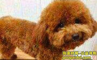 扬州寻狗,我的泰迪2020.1.29走失了,它是一只非常可爱的宠物狗狗,希望它早日回家,不要变成流浪狗。