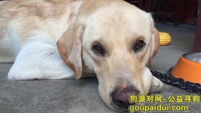 铜陵寻狗启示,狗子丢了很可怜,只求他平安,早日找到他,带他回家!,它是一只非常可爱的宠物狗狗,希望它早日回家,不要变成流浪狗。