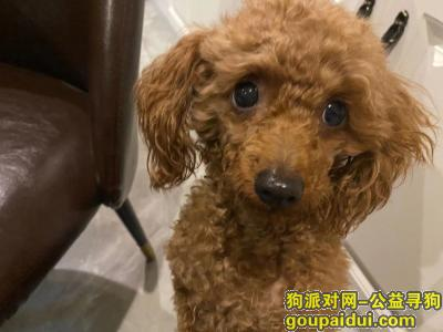 ,惠州水口寻爱狗,有爱人士请帮忙,它是一只非常可爱的宠物狗狗,希望它早日回家,不要变成流浪狗。