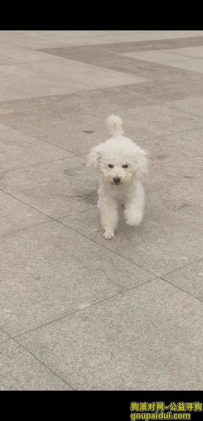 青岛找狗,皮皮,一定要好好的,好想你,它是一只非常可爱的宠物狗狗,希望它早日回家,不要变成流浪狗。