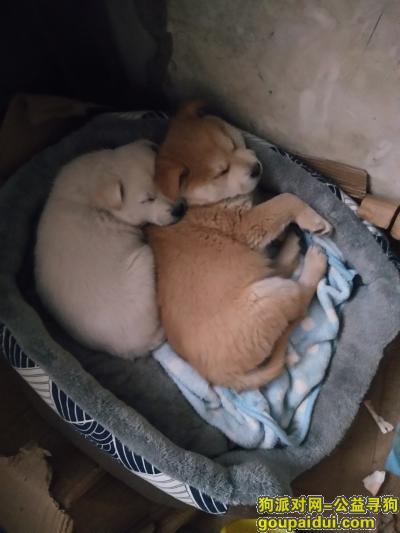 台州寻狗网,我找白色的这只狗她叫牛奶,它是一只非常可爱的宠物狗狗,希望它早日回家,不要变成流浪狗。