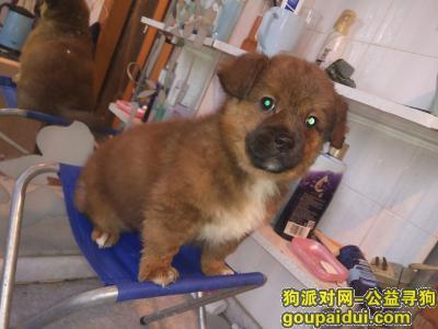 ,小狗丢失,找回重谢!武昌竹苑小区附近,它是一只非常可爱的宠物狗狗,希望它早日回家,不要变成流浪狗。