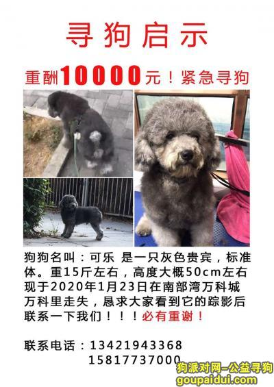 ,于2020年1月23号东莞虎门走丢灰色泰迪,捡到的爱心人士归还重谢一万元,感谢!,它是一只非常可爱的宠物狗狗,希望它早日回家,不要变成流浪狗。
