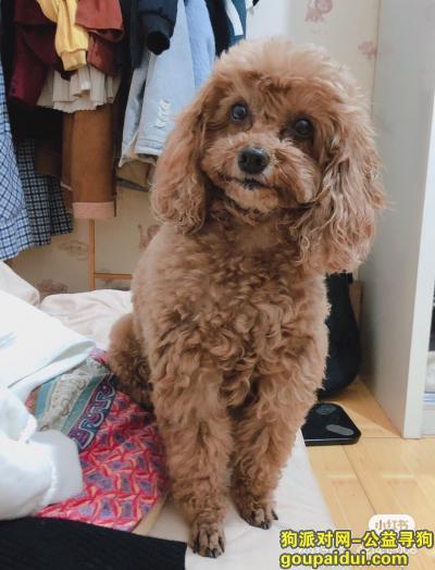 阜阳丢狗,寻狗启示,麻烦大家帮忙注意下,它是一只非常可爱的宠物狗狗,希望它早日回家,不要变成流浪狗。