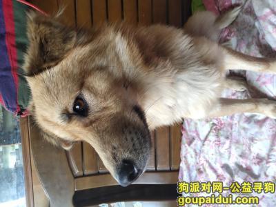 【上海找狗】,希望缘缘能够赶快回家,它是一只非常可爱的宠物狗狗,希望它早日回家,不要变成流浪狗。