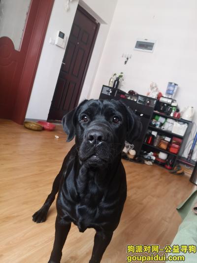 天津市河北区锦江里找狗,它是一只非常可爱的宠物狗狗,希望它早日回家,不要变成流浪狗。
